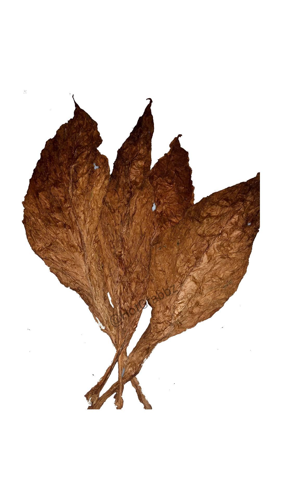 Tobacco Fronto Leaf Canada